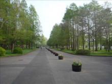 $ベストリハで働く社長のブログ-水元公園